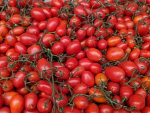 Organic tomatoes ready to eat